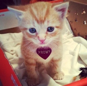 promposal-cat